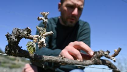Nuit de gel catastrophique pour les arboriculteurs de la vallée du Rhône