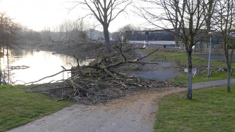Les arbres coupés l'ont été près de l'étang du Glavion. Leurs branches risquaient aussi de tomber sur un parc de jeux.