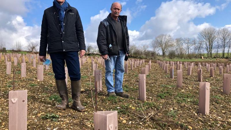 A Chuignes, le vignoble s'étend sur un hectare et demi. Une infime parcelle parmi d'autres à l'échelle du futur domaine régional du vin des Hauts-de-France.