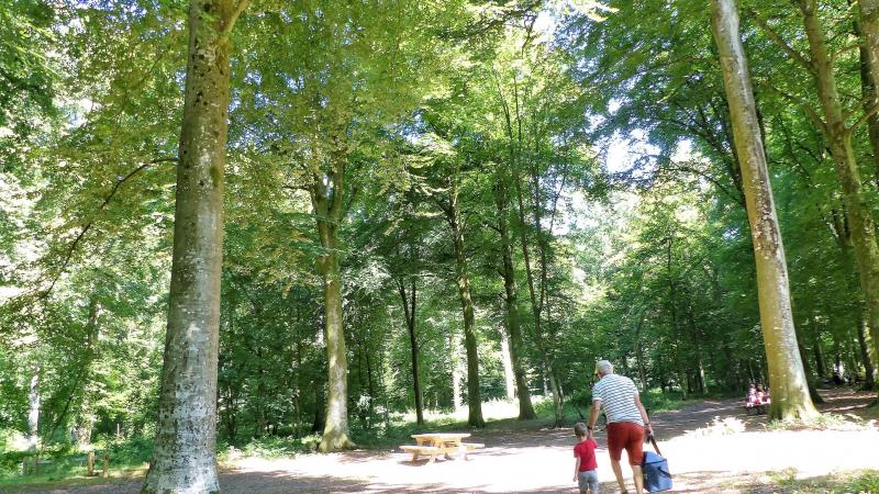 Si vous aviez prévu d'aller marcher dans un bois il faudra donc vous y rendre à pied, à vélo ou même à cheval... (Photo d'illustration);