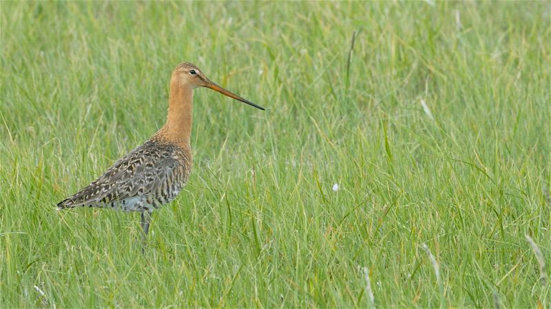 La Biebrza est une rivière qui crée un marais pour les oiseaux nicheurs ou migrateurs.