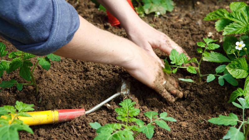 Les jardiniers sont généralement très occupés dans leur potager durant les mois de mars et avril. Avec le confinement, ça devient compliqué s'il se situe à plus de 10 km de son domicile...