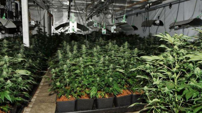 Les plants étaient entreposés dans un garage de 40 m2.