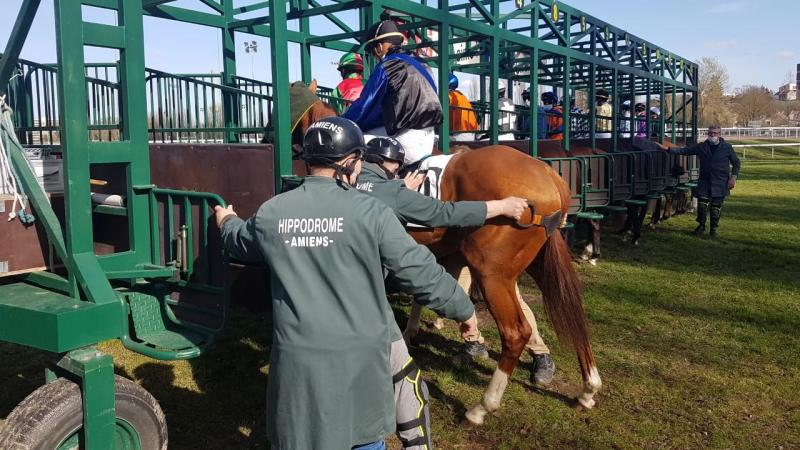 Faire entrer un cheval dans une stalle de départ n'est pas chose aisée.