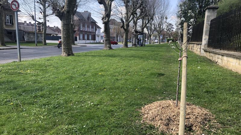 Le boulevard Mony accueille depuis fin mars les premier arbres plantés après des naissances.