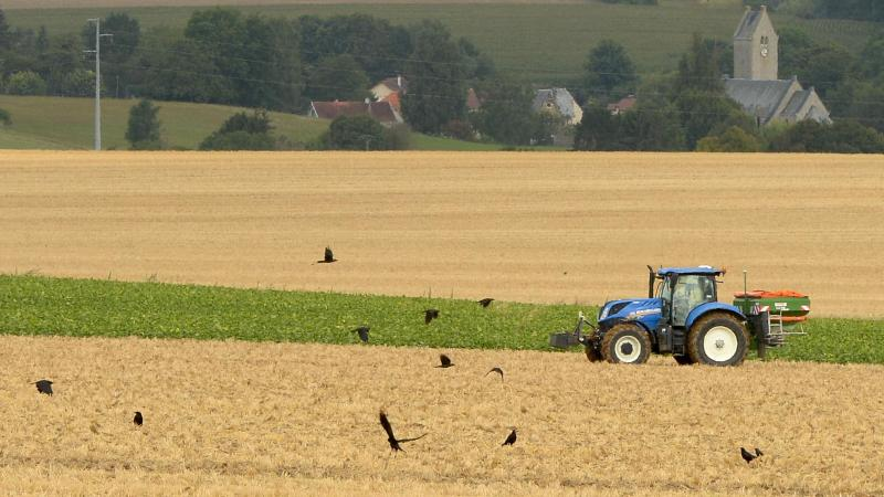 À chaque printemps, les corbeaux viennent manger les graines semées par les agriculteurs.