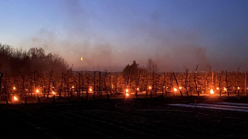Des centaines de bougies ont été positionnées dans les vergers dans la cueillette de Saint-Gratien. «Cela nous prend deux heures pour toutes les allumer», raconte M. Liénart.