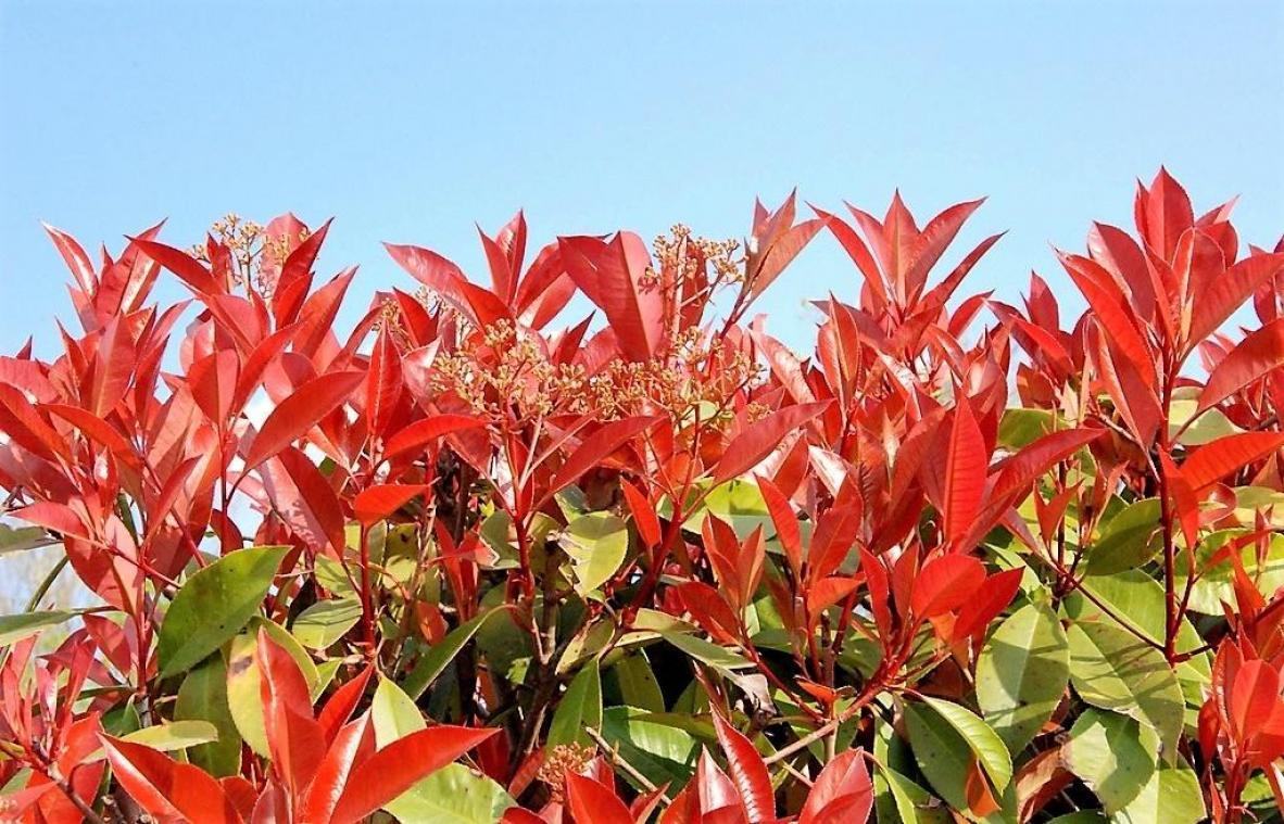 Arbuste Brise Vue Terrasse installer des brise-vue naturels dans son jardin