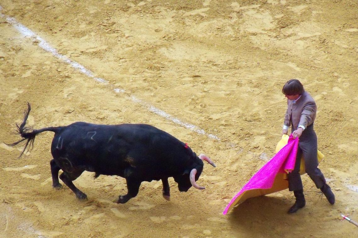 Les corridas pourraient bientôt être interdites aux mineurs
