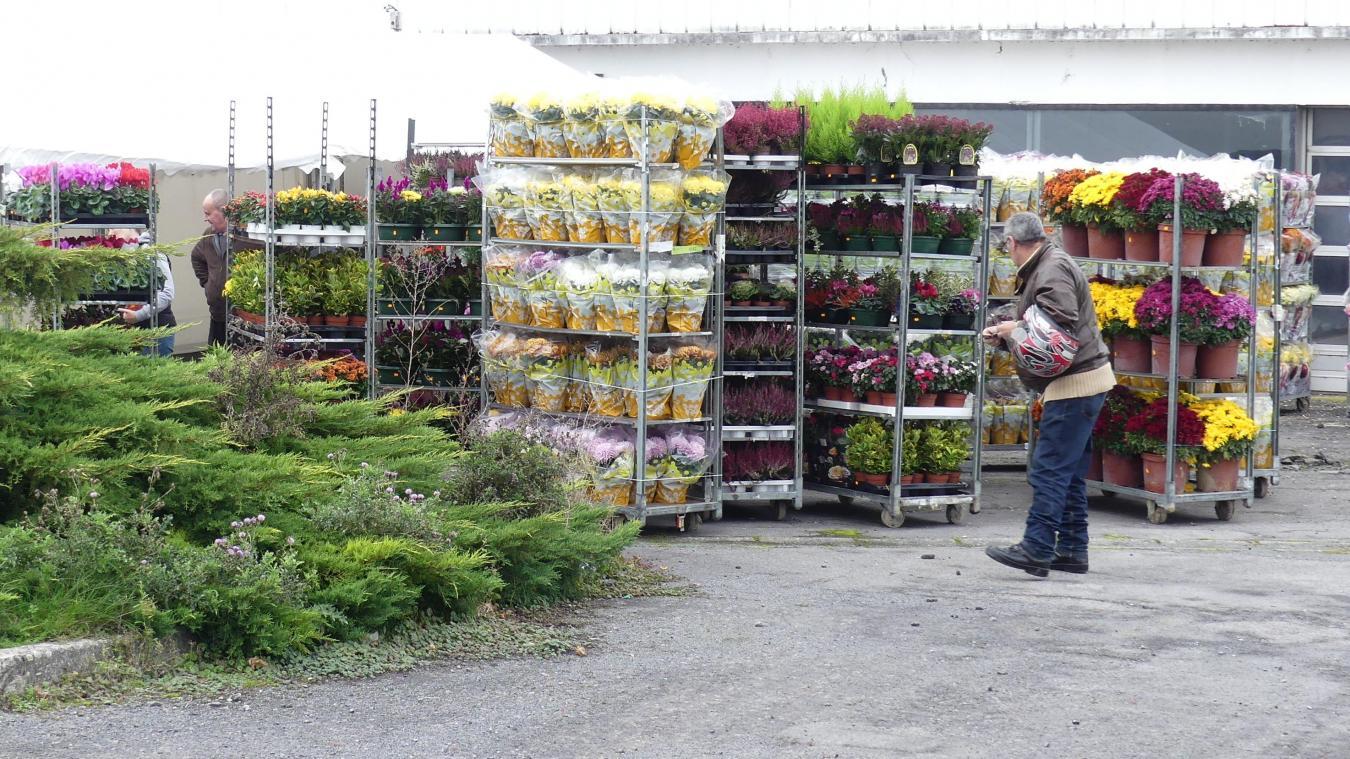 Horticulteur Val D Oise À péronne, c'est la guerre des fleurs de toussaint