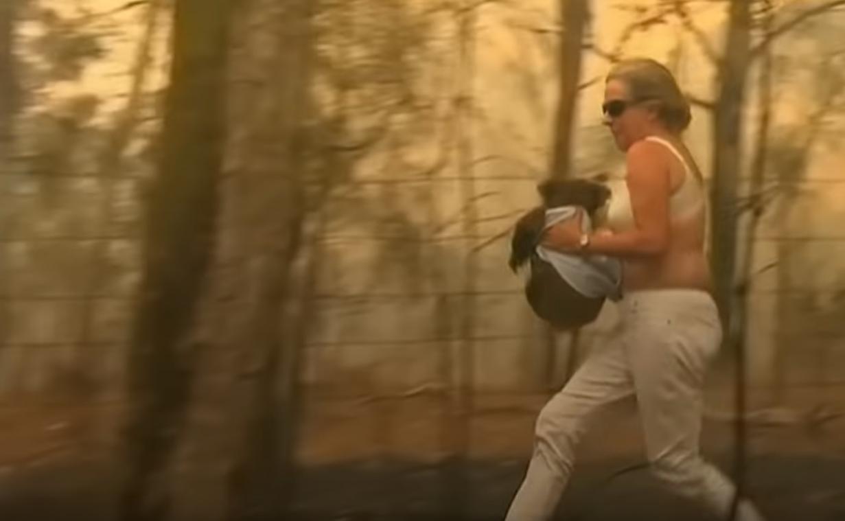 Australie : l'incroyable geste d'une femme pour sauver un koala