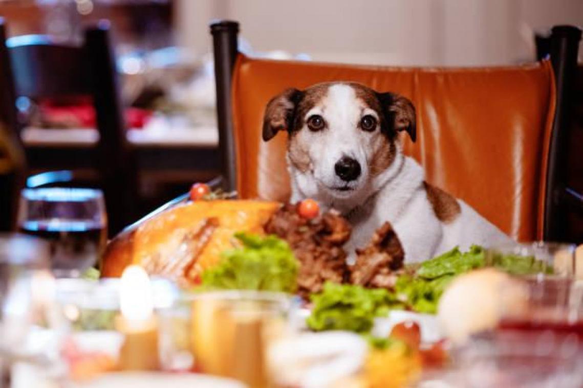 Canape Chien Maison Du Monde noël: attention à ce que vous donnez à votre chien