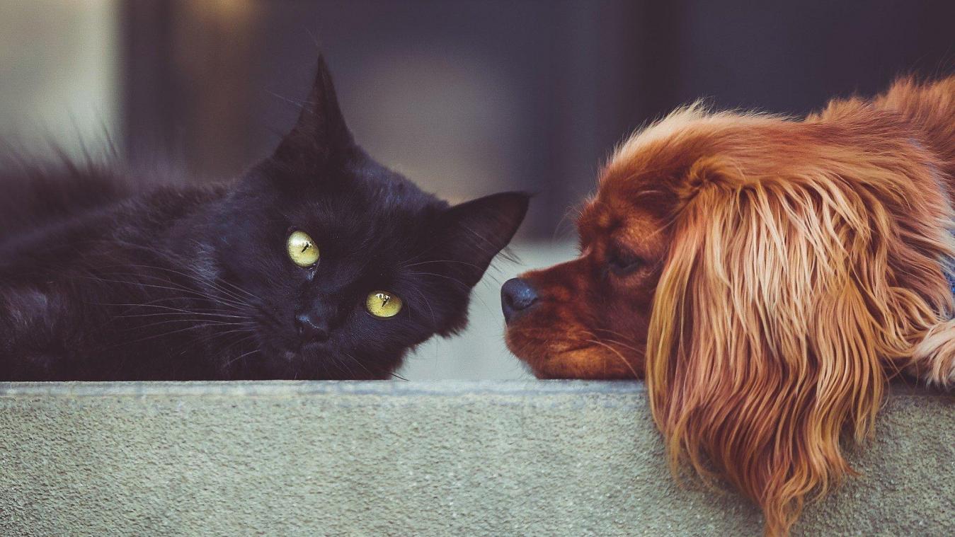 Canape Chien Maison Du Monde spotify veut déstresser les animaux laissés seuls à la maison