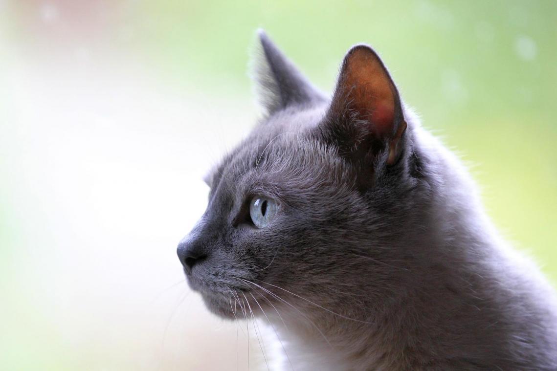 Covid-19 : un chat testé positif pour la première fois en France