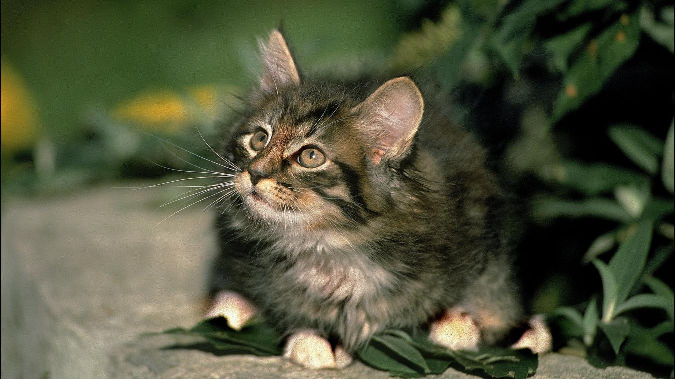Comment rendre heureux un chat maltraité par le passé? Réponse d'Hélène Gateau, notre vétérinaire originaire de Chauny