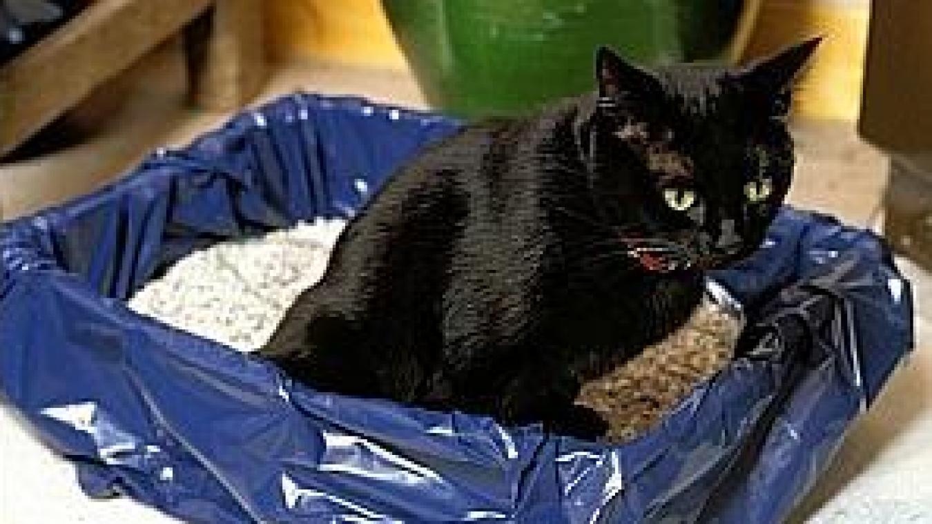 Comment empêcher un chat de rester dans sa litière ? Réponse d'Hélène Gateau, notre célèbre vétérinaire et chroniqueuse