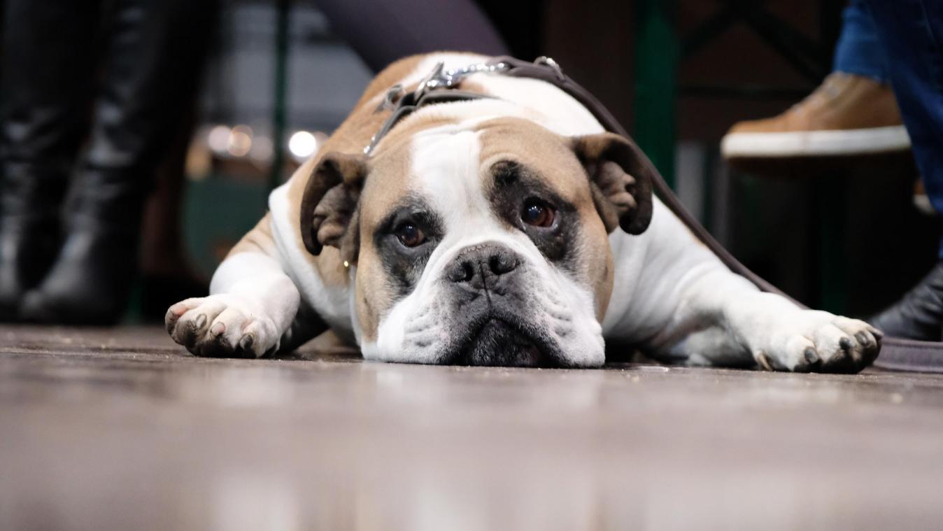 Mon vétérinaire a-t-il raison de ne couper que les griffes des pattes arrière de mon chien? Réponse d'Hélène Gateau, célèbre vétérinaire et chroniqueuse originaire de l'Aisne