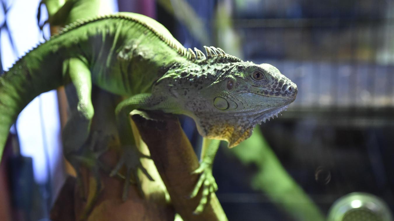 Est-ce légal d'avoir des animaux exotiques chez soi ? Réponse d'Hélène Gateau, célèbre vétérinaire et chroniqueuse originaire de l'Aisne