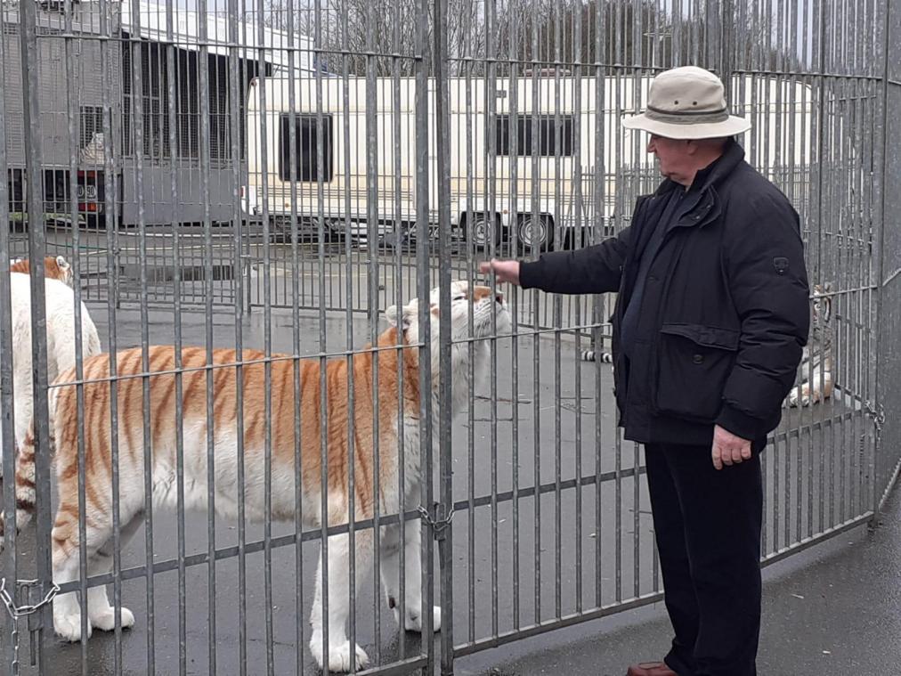Mario Masson, dompteur, possède 10 tigres du Bengale.