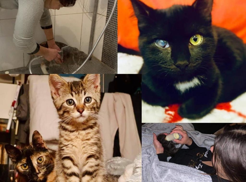 À Gisors, les anges gardiens des chats de Bon'Eure Kawin cherchent de nouveaux foyers