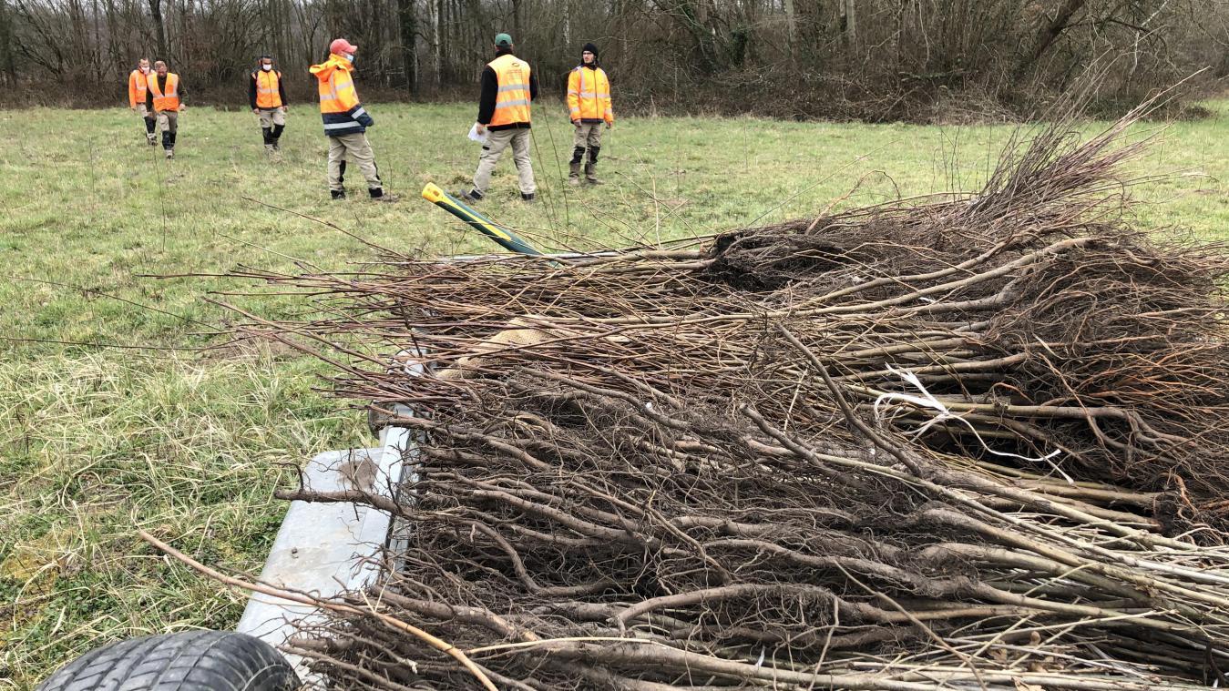 Cinq hectares d'arbres plantés à Chiry-Ourscamp pour compenser le canal Seine-Nord