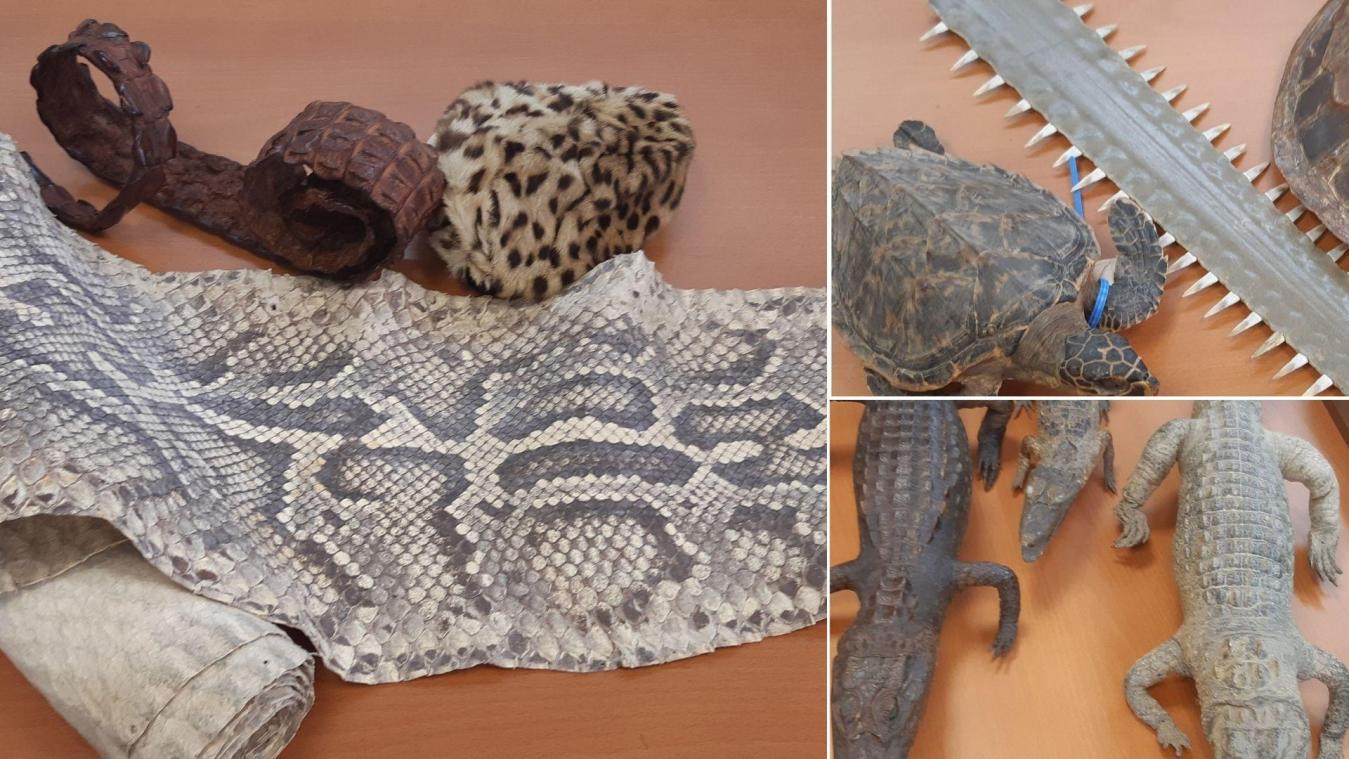 53 articles, tous saisis par les douanes ces dernières années, ont été donnés au zoo d'Amiens.