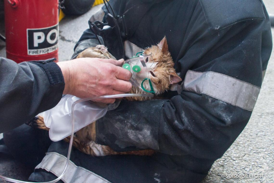 Les chatons ont été secourus par les sapeurs-pompiers de Mouy.