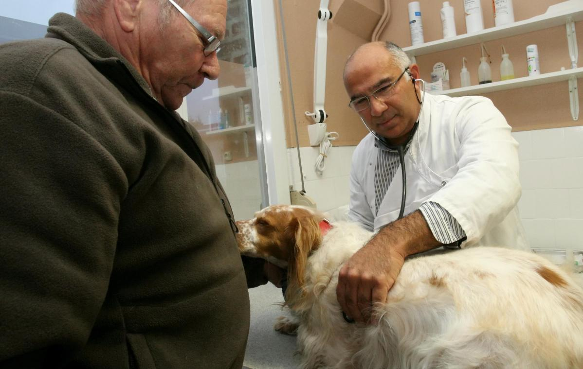 Les vétérinaires sont habitués à vacciner les animaux.
