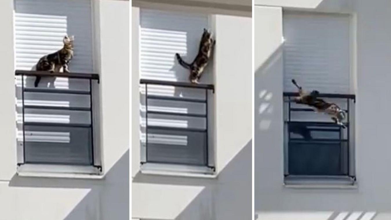 Les riverains ont appelé à l'aide une association après avoir tenté, en vain, de joindre le propriétaire du petit chat.