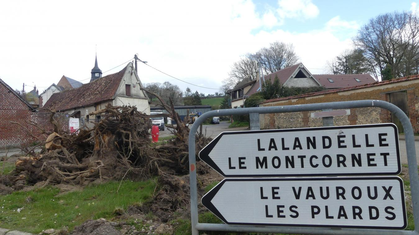 Une douzaine d'arbres ont été abattus pour les besoins des travaux.
