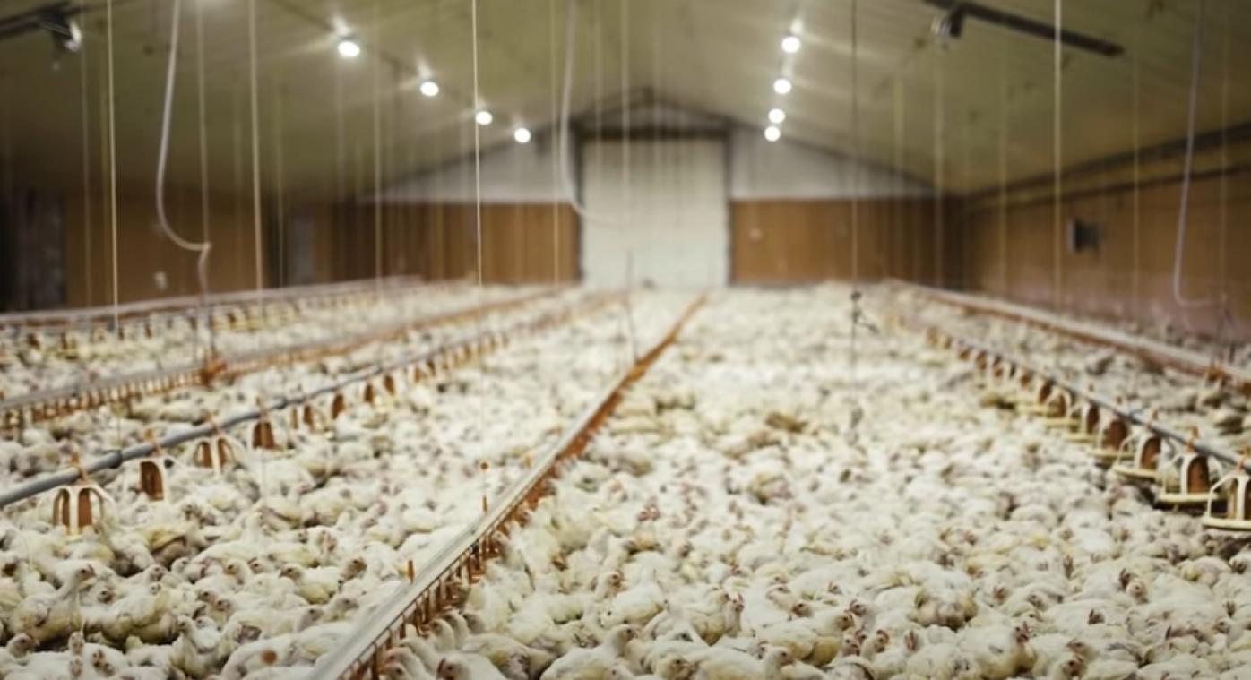 Selon les chiffres fournis par l'éleveur, si la préfecture donne son autorisation, le nombre de poulets produits sur le site passera d'environ 150.000 à près de 860.000.