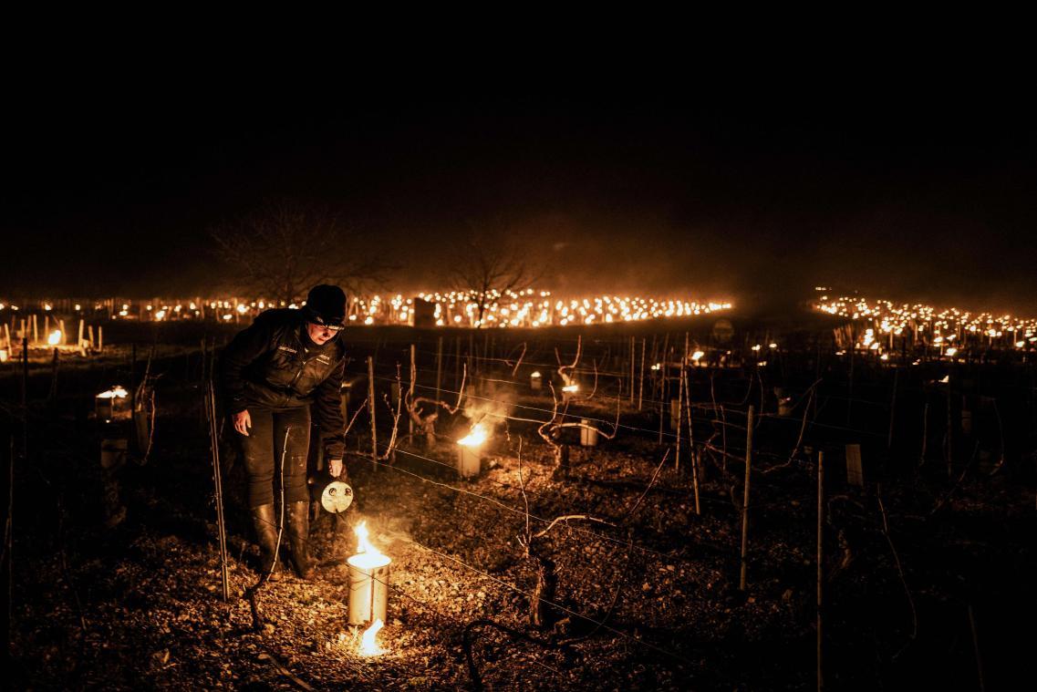 Pour tenter de sauver leurs récoltes, certains viticulteurs et vignerons ont allumé des bougies anti-gel.