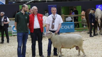 Au Salon de l'agriculture, Fabrice Carron présente l'un de ses Boulonnais, tandis que son frère Cyril est venu avec ses poules et coqs.