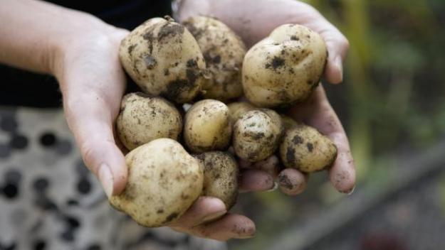 «Nous avons découvert que l'orteil était en fait une pomme de terre avec un champignon poussant juste à côté», a expliqué la police de Northumbria.