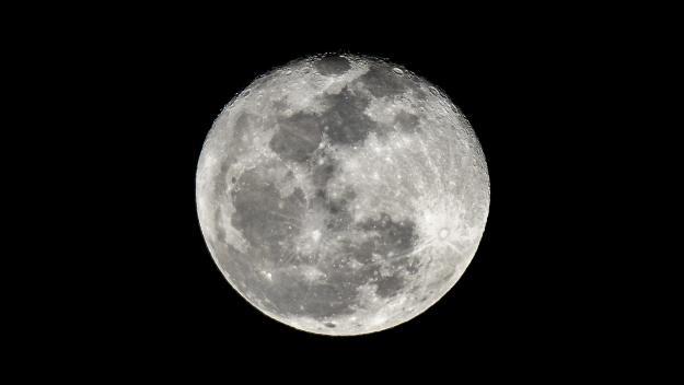 Objectif lune pour du sperme, des oeufs et des spores.