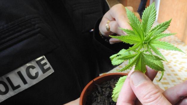 La culture de cannabis est interdite par la loi.(Photo d'illustration DR)
