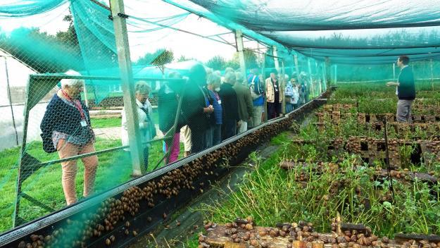 Parmi les exposants du marché des produits du terroir, les Saveurs d'escargots de Sentelie, présentes dimanche au plan d'eau d'Ailly-sur-Noye.