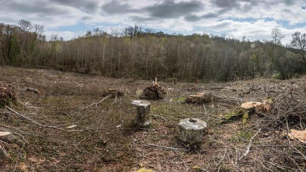 Le spectacle de la forêt nue autant que du stockage du bois coupé est impressionnant. Parmi les arbres abattus figurent des chênes bicentenaires. (Photos : HCR)