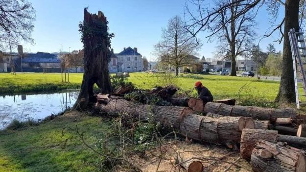 L'arbre, qui avait au moins 150 ans, a été abattu par mesure de sécurité.