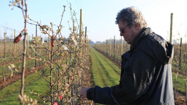 Luc Martine, arboriculteur à Aubigny-aux-Kaisnes, constate des fleurs et des feuilles brûlées par le gel.